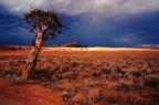Dating Desert – #AtoZChallenge